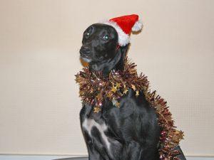 Nelson - shamed for shredding Santa